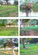 Cheap agri land in Surandai